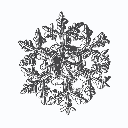 This vector illustration based on macro photo of real snowflake: large stellar dendrite snow crystal with massive hexagonal center, six ornate arms with fine symmetry and complex inner pattern. Illustration