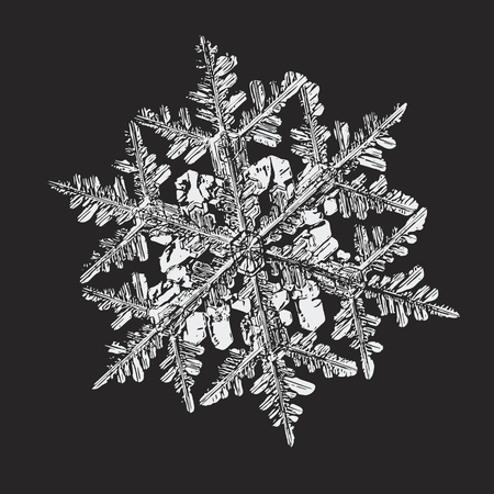 White snowflake on black background. This vector illustration based on macro photo of real snow crystal: big stellar dendrite with fine hexagonal symmetry, complex, elegant shape and six thin arms.