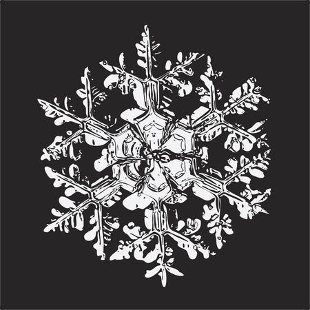 White snowflake on black background. This vector illustration based on macro photo of real snow crystal: large stellar dendrite with massive central hexagon and six ornate arms with side branches.