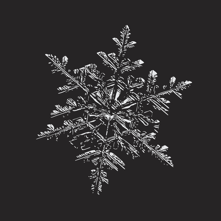 This vector illustration based on macro photo of real snowflake: large stellar dendrite snow crystal with fine hexagonal symmetry, ornate shape and six long, thin arms complex structure. Illustration