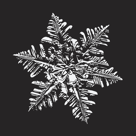 White snowflake on black background. This vector illustration based on macro photo of real snow crystal: large stellar dendrite with fine hexagonal symmetry, complex ornate shape and six elegant arms.