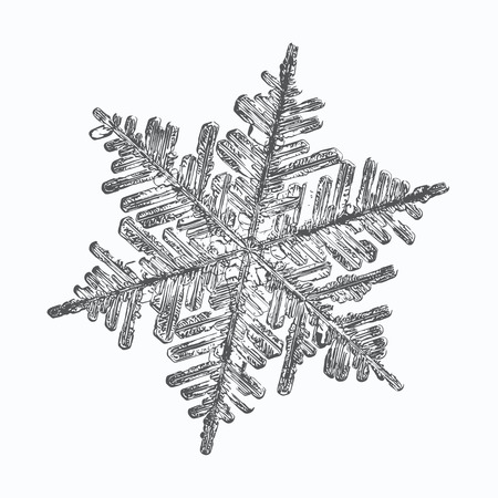 Snowflake on white background. This vector illustration based on macro photo of real snow crystal: complex stellar dendrite with fine hexagonal symmetry, ornate shape and six thin, elegant arms. Illustration