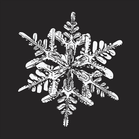 This vector illustration based on macro photo of real snowflake: big stellar dendrite snow crystal with fine hexagonal symmetry, complex ornate shape and six long, elegant arms with side branches.