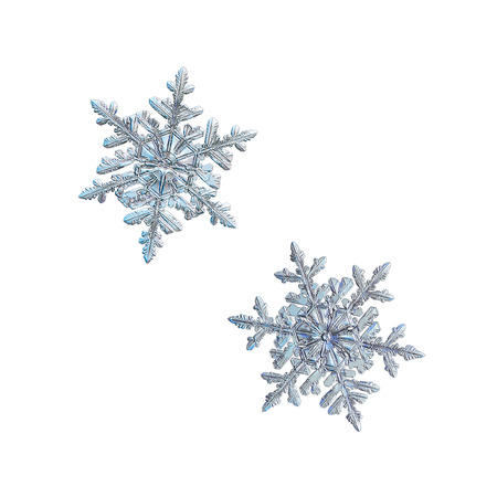 Two snowflakes isolated on white background. Macro photo of real snow crystals: large stellar dendrites with elegant, ornate shapes, relief surface, fine hexagonal symmetry and complex structure. Stock Photo