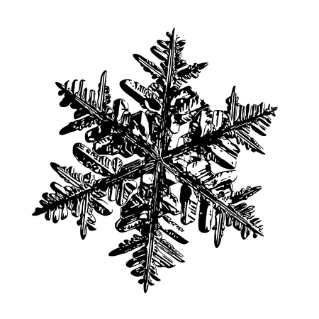 Snowflake on white background. This illustration based on macro photo of real snow crystal: complex stellar dendrite with fine hexagonal symmetry, ornate shape and six thin, elegant arms. Stock Photo