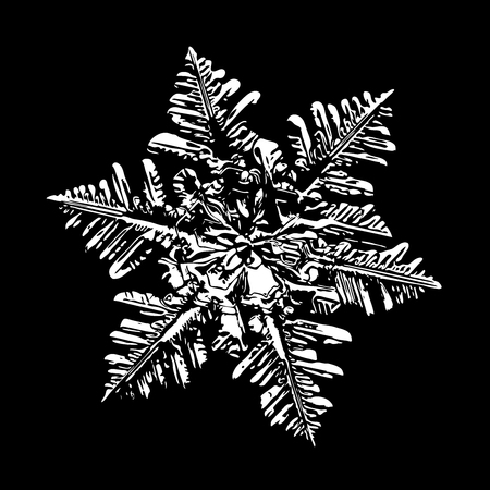 White snowflake on black background. This illustration based on macro photo of real snow crystal: large stellar dendrite with fine hexagonal symmetry, complex ornate shape and six elegant arms.