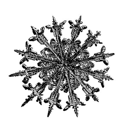 Snowflake on white background. This illustration based on macro photo of real snow crystal: unusual, rare specimen with twelve thin, elegant arms, fine symmetry and complex inner structure.