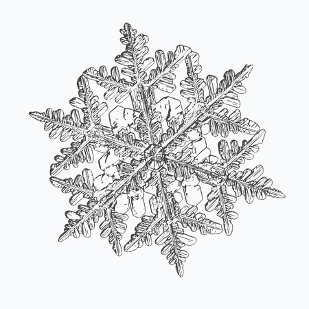 Snowflake isolated on white background. This vector illustration based on macro photo of real snow crystal: beautiful stellar dendrite with hexagonal symmetry, complex shape and six elegant arms.