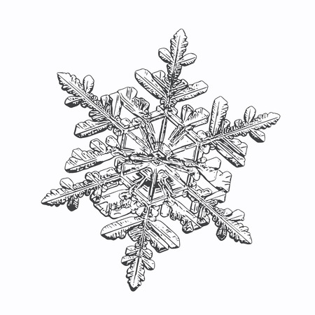 Snowflake isolated on white background. This vector illustration based on macro photo of real snow crystal: small stellar dendrite with good hexagonal symmetry, elegant shape and six thin, long arms.
