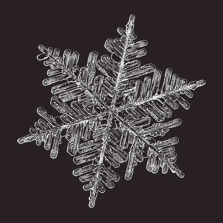 Snowflake isolated on black background. This vector illustration based on macro photo of real snow crystal: large stellar dendrite with hexagonal symmetry, complex, ornate shape and elegant arms.