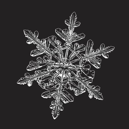 Flocon de neige isolé sur fond noir. Cette illustration vectorielle basée sur une photo macro de vrai cristal de neige: dendrite stellaire complexe avec une symétrie hexagonale fine, une forme ornée et des bras fins et élégants. Vecteurs