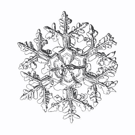 Snowflake isolated on white background. This vector illustration based on macro photo of real snow crystal: complex stellar dendrite with fine hexagonal symmetry, ornate shape and thin, elegant arms.