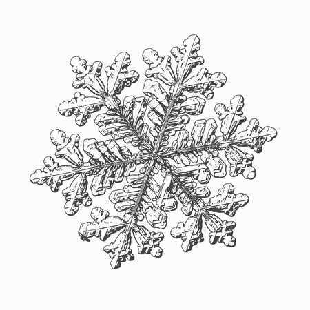 Snowflake isolated on white background. This vector illustration based on macro photo of real snow crystal: large stellar dendrite with hexagonal symmetry, complex, ornate shape and elegant arms.
