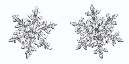 Two snowflakes isolated on white background. Illustration
