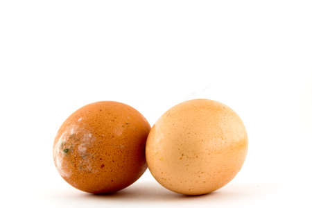 brown egg  on white background Stock Photo