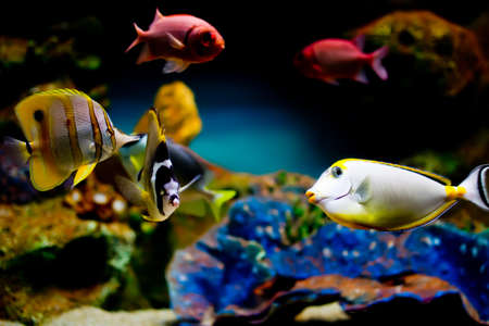 colorful exotic fish an in tropical fish