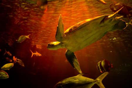A Green turtle  in Aquarium Stock Photo