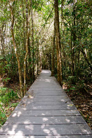 elevated walkway: Jungle path in Tropical Rain Forest