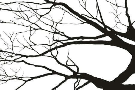 silhouettes-of-tree photo