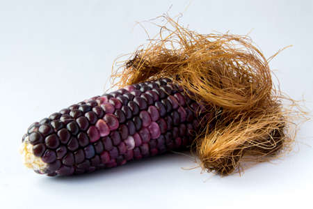 testicles: Black corn  shape of a penis