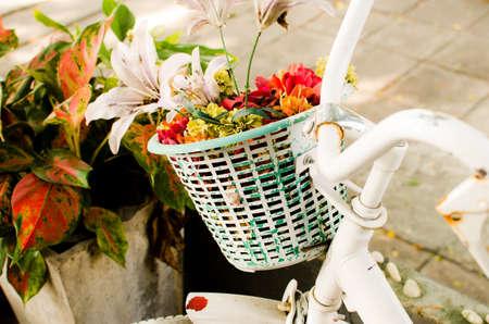 handle bars: bicicleta cuenta con hermosas flores de color rosa en una cesta en la parte delantera de la moto Foto de archivo