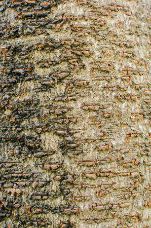 Tree background  texture