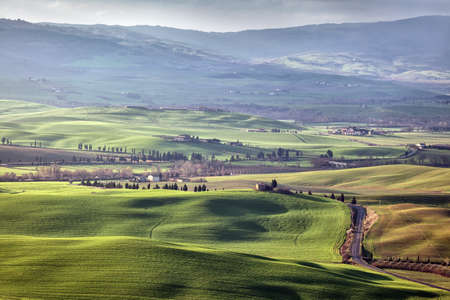 olive groves: Farm of olive groves and vineyards in foggy morning on Val DOrcia, Toscana, Italy