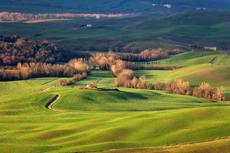 olive groves: Farm of olive groves and vineyards on Val DOrcia, Toscana, Italy