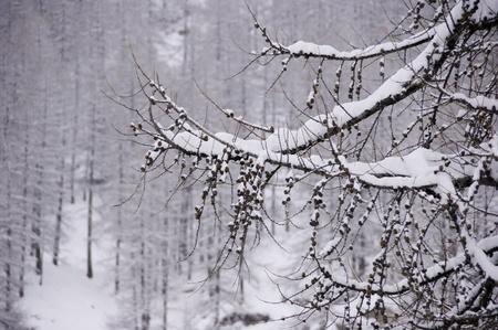 tree full of snow Stock Photo