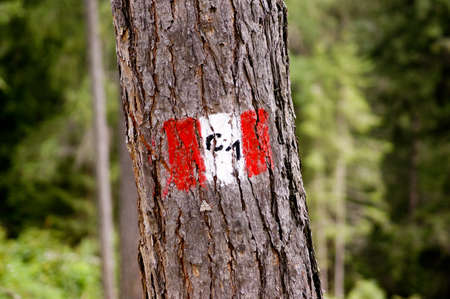 hiking trail sign on a tree