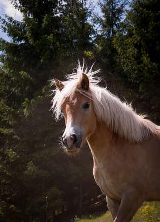 free horse Stock Photo - 9510796