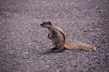 little squirrel posing for the camera Stock Photo - 9820639