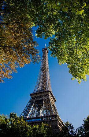 eiffel tower btween the trees