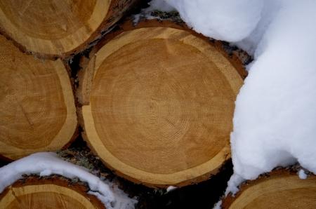 tree trunk in winter