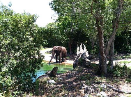 Olifant drinken van een rivier Stockfoto