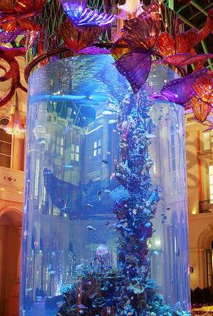 Aqua display inside the glass case.