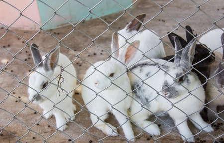 rabbit cage: Coniglio in una gabbia