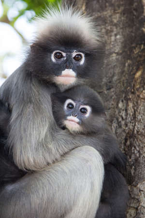 Baby macaque with his mother.