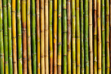 bark background: bamboo background  Stock Photo
