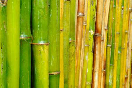 bamboo background  Stock Photo
