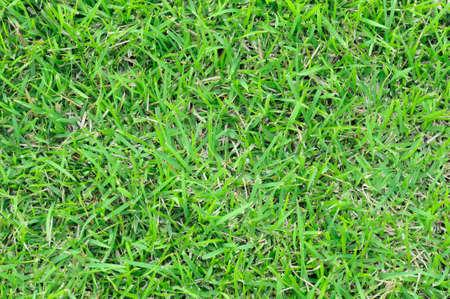 Closedup green grass background