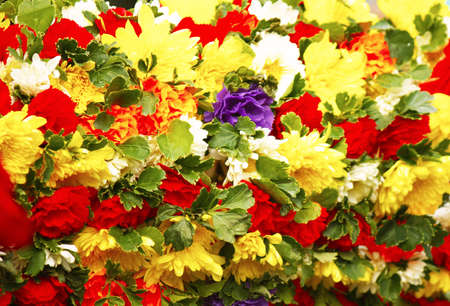 colorful flowers Stock Photo - 12722508