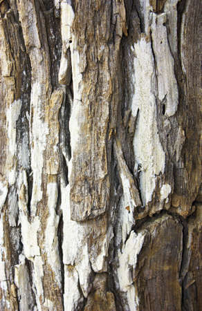 bark background photo