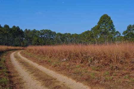 savana: Road thriugh savana field