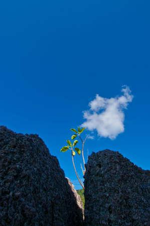 crecimiento planta: Crecimiento de las plantas en la roca