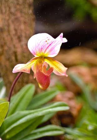 under ground: A ground wild orchid under the tree
