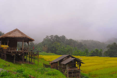 framer: Golden rice field at the hill in the north of Thailand
