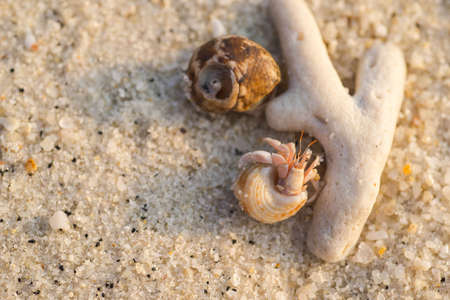 hermits: Couple hermits on the beach Stock Photo