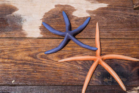sea star: Sea star on wet wood Stock Photo