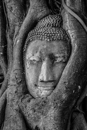stone buddha: Ayutthaya